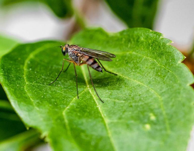 Komary, a ogródek – jak skutecznie unicestwić te insekty w naszym ogródku?